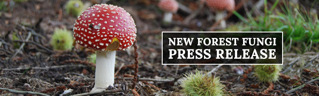 "Mushroom News: Fungi Picking Ban ""unscientific"" say fungi experts"