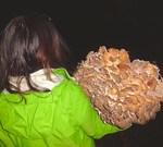 Grand Rapids Wild Mushrooms