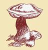 Northwest Mushroomers Association