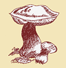 Northwest Mushroomers Association