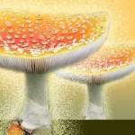 Cercle de Mycologues de Rimouski