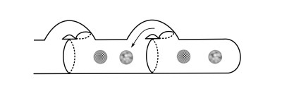Once the nucleus completes its passage through the hook cell, it joins the other nucleus and the hook cell forms a wall behind it.