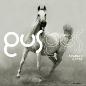 Gus Gus - Arabian Horse