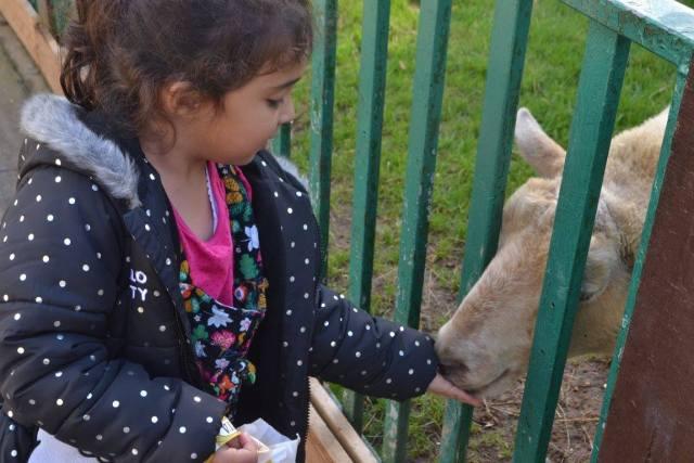 Feeding animals at Paradise Wildlife Park