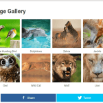 Adding Image Gallery in WordPress Without Coding