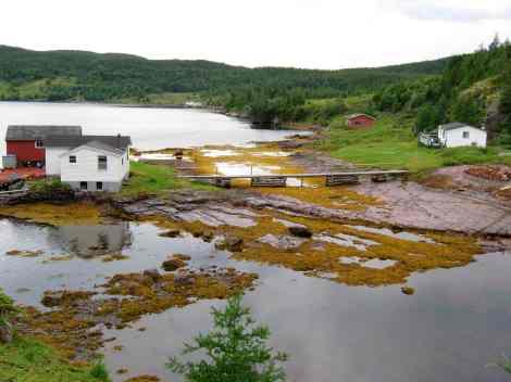 Random Island Newfoundland