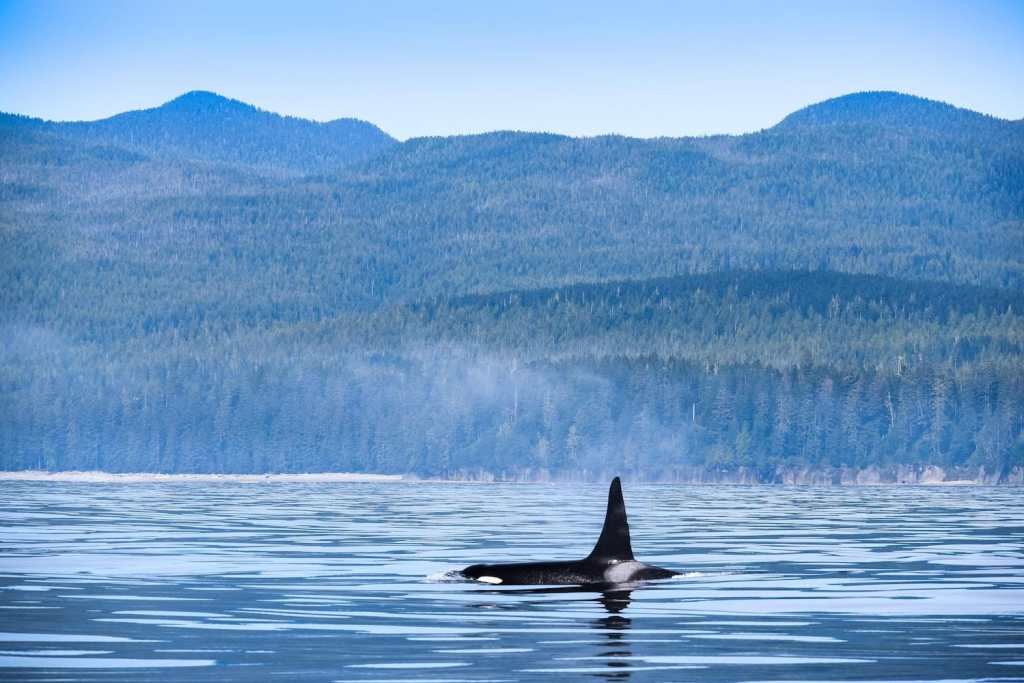 best things to do in bc