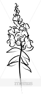 snapdragon flower clipart chinese