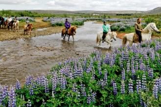snorkelling and horseback riding