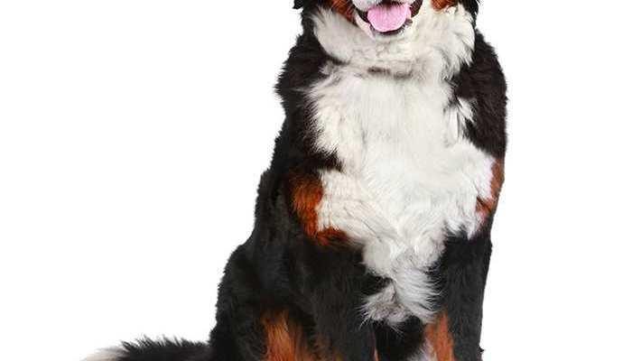 veterinarijos vaistine kaune