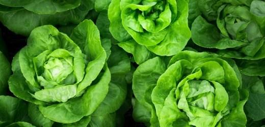 Kuo naudingos salotos?