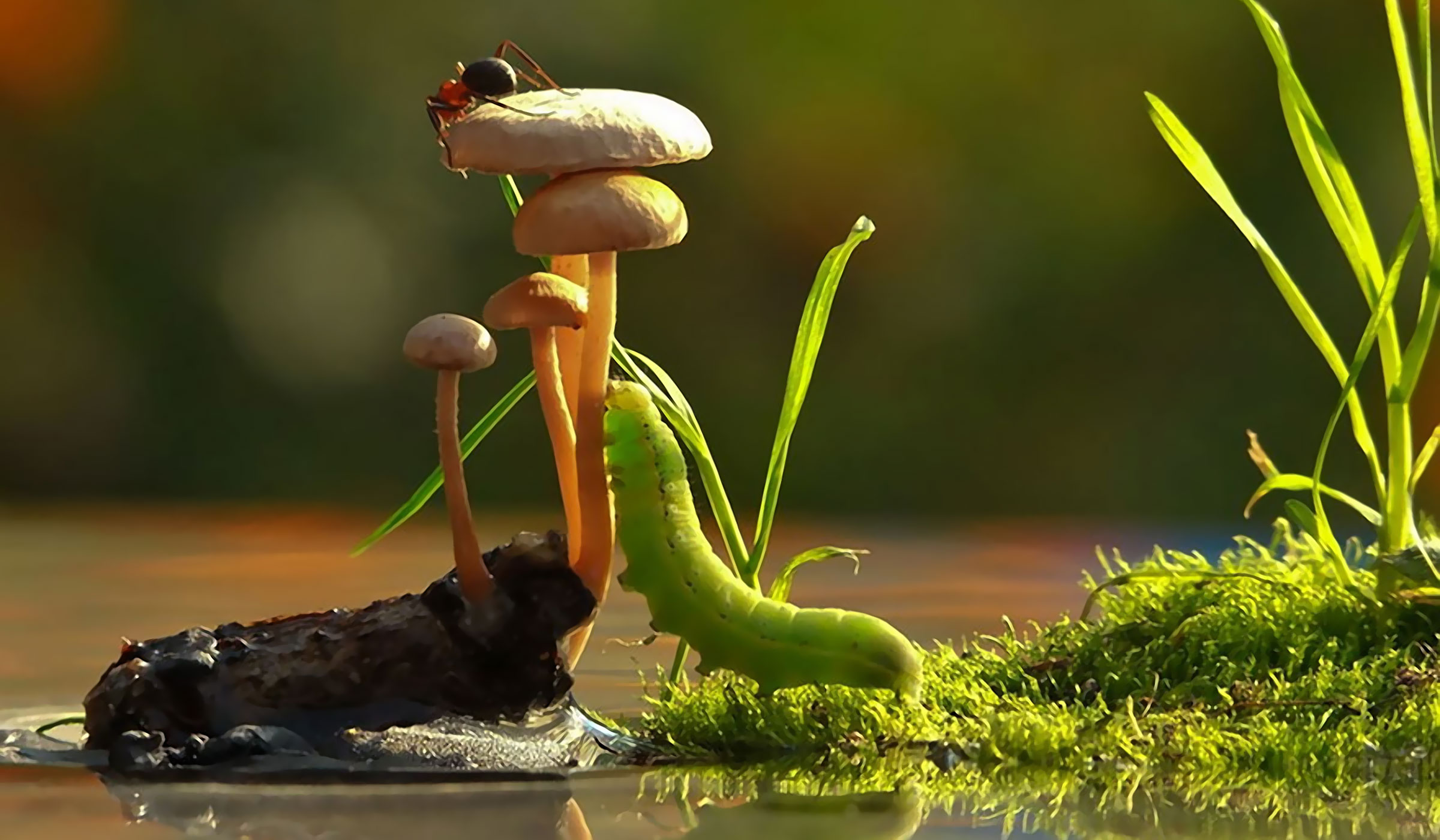 An Incredible World of Mushrooms