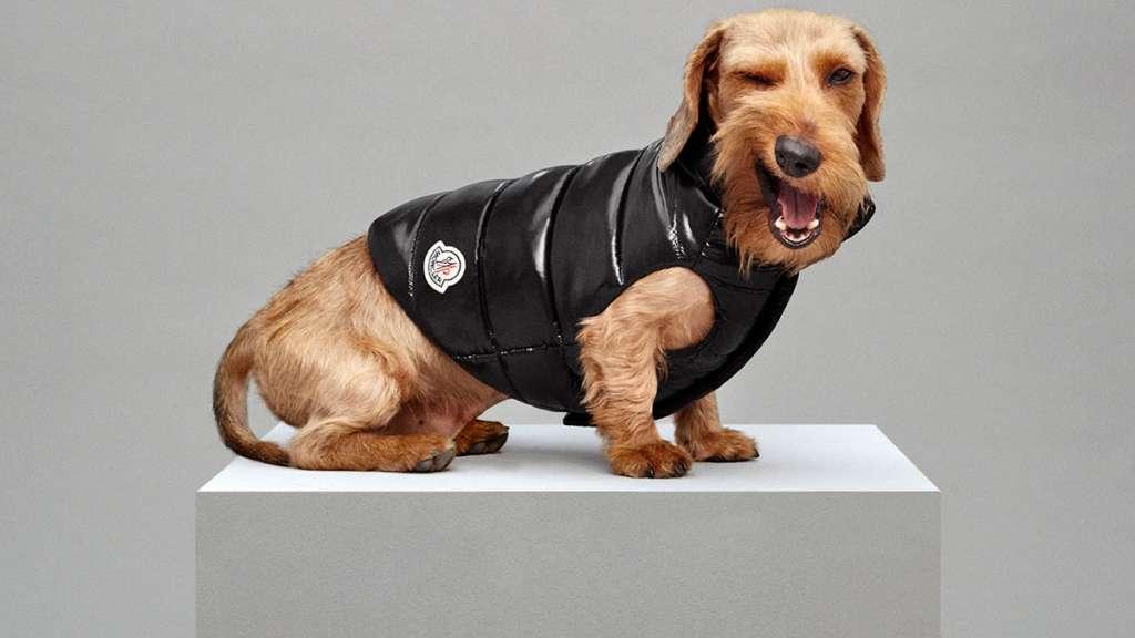 Moncler Dog Puffer Jacket