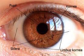 Dampak Gadget pada Kesehatan Mata
