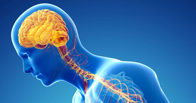 Alkali Beslenme Zihinsel Performansı Arttırır
