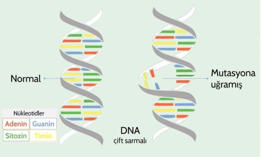 Mutasyon DNA
