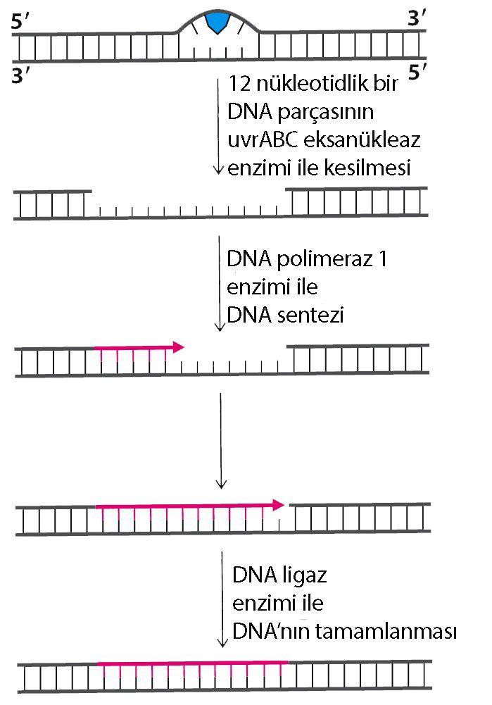 Sigara DNA