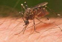 Sivrisinekler'den Kurtulmak İçin Doğal Çözümler
