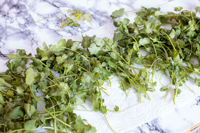 Cilantro stems spread on several paper towels