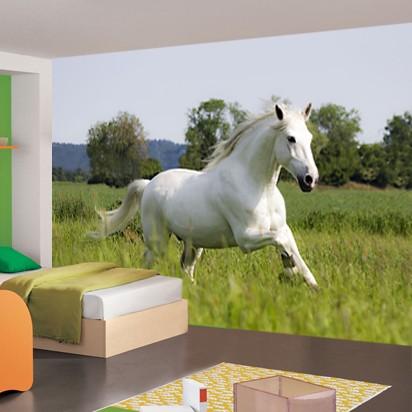 Vlies fotobehang Wit paard  Dieren behang  Muurmodenl
