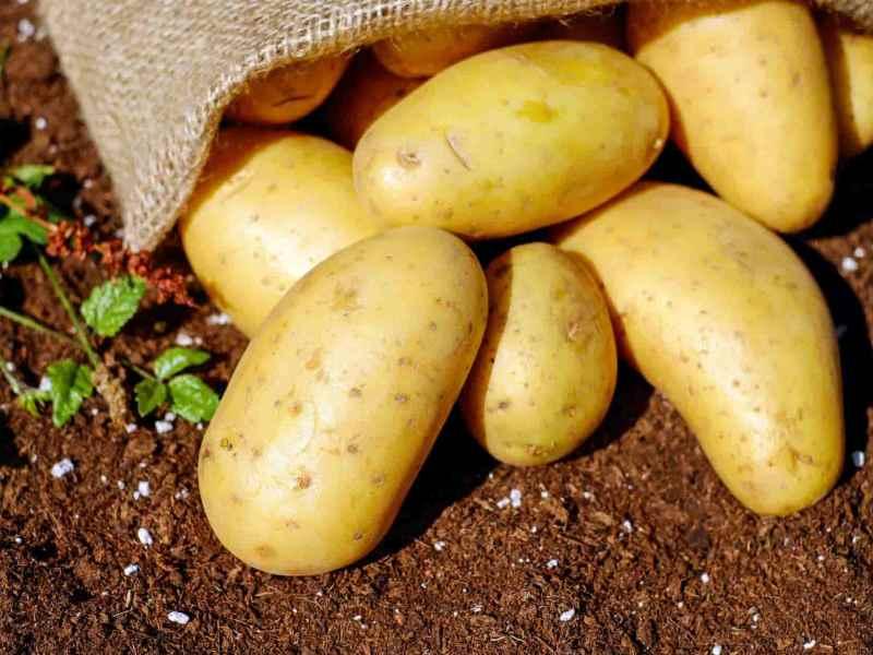 rumors increases potato onion rice flour price muzaffarpur