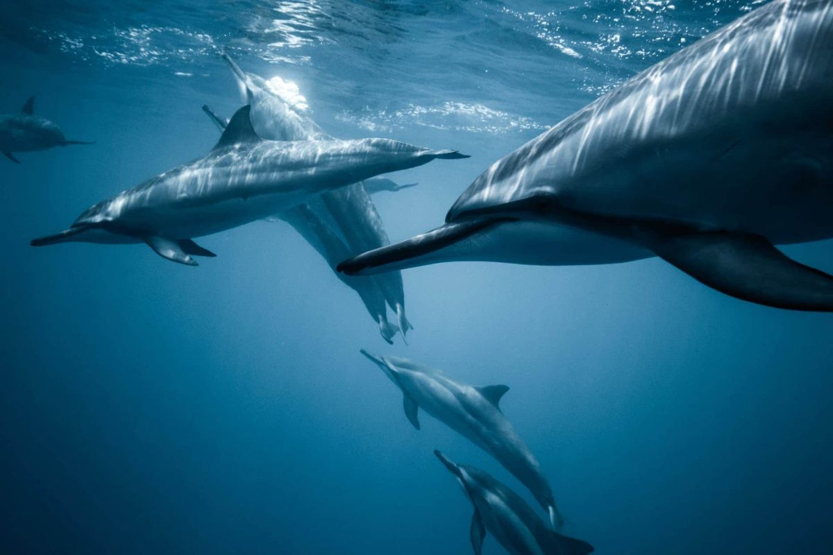 Half of India's Dolphin population lives in Bihar