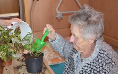 Senioři v domově pro seniory CSP Vodňany si zamilovali zahradničení