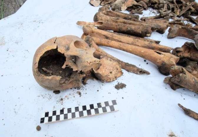 odkopane ludzkie kości