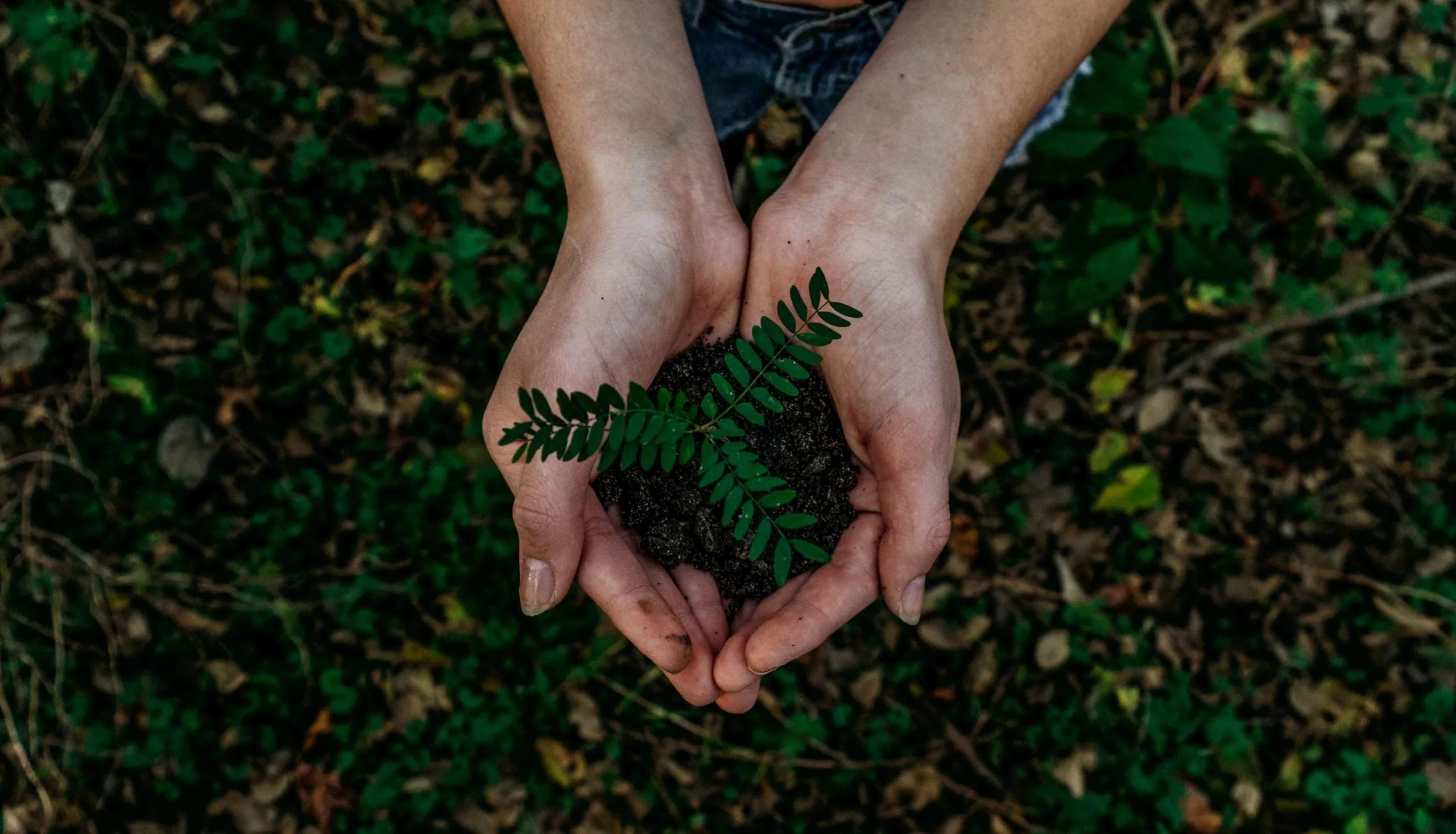 Imagen representando concienciación con la naturaleza
