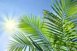 Palm Sunday-2