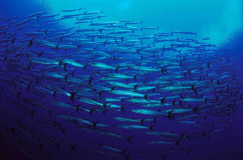 Resulta ng larawan para sa apo reef