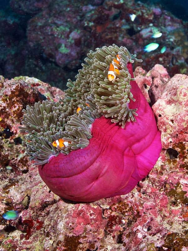 Little Nemo in Similan Islands