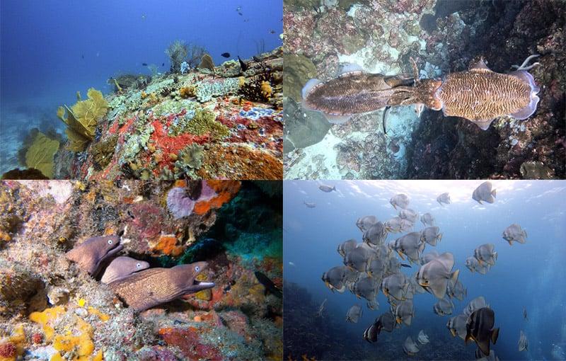 Thailand Liveaboard Diving Impressions