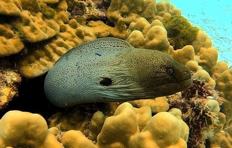 Thailand Diving Phi Phi Island