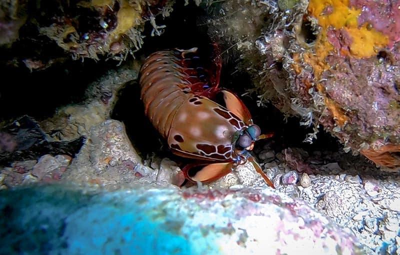 Hin Daeng Hin Muang Thailand Liveaboard Diving