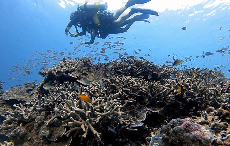 Similan Islands Diving MV Giamani