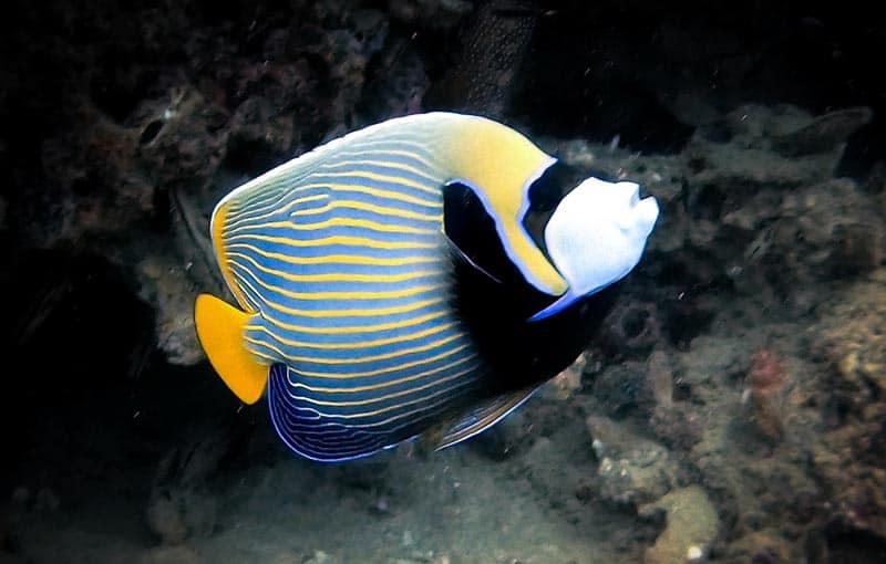 Thailand Diving - Koh Bida Nai Phi Phi Island