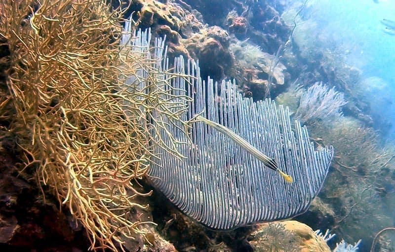 Koh Bida Nai Thailand Dive Site