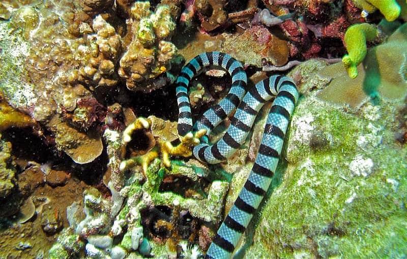 Similan Islands Diving Liveaboard