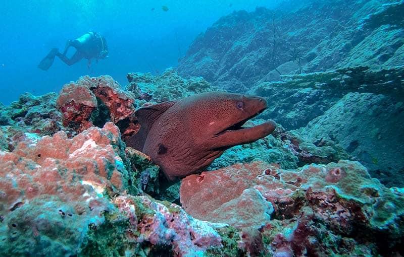 Thailand Diving Liveaboard - Thailand Dive Sites