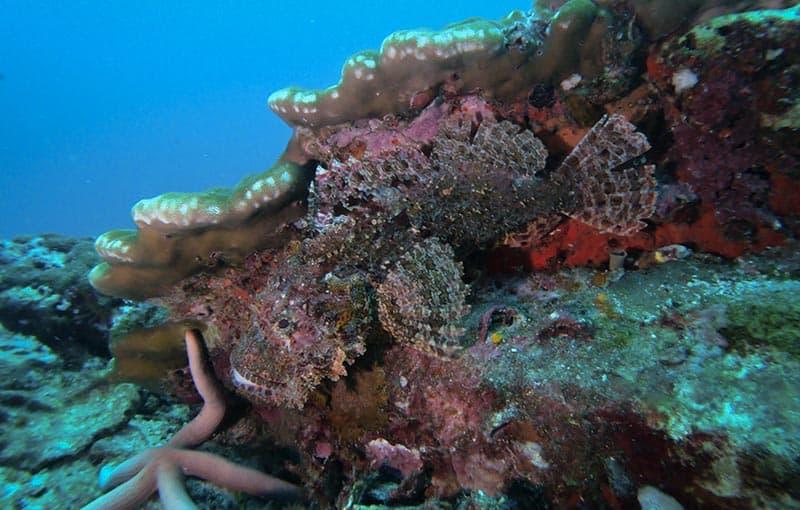 Top Thailand Dive Sites - Thailand Liveaboard Diving MV Giamani