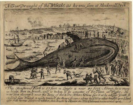 thames-whale
