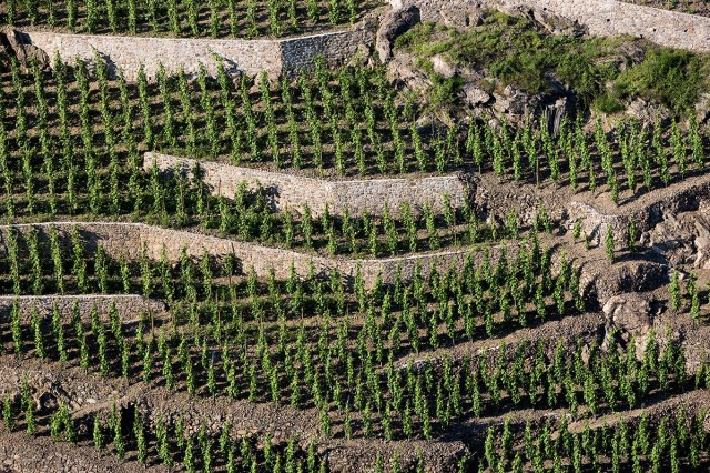 """Take a Ride with """"The Tightrope Grapes"""" in Côte-Rôtie"""