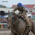 New Graded Stakes Winner Gold Medal Dancer Has Canterbury History