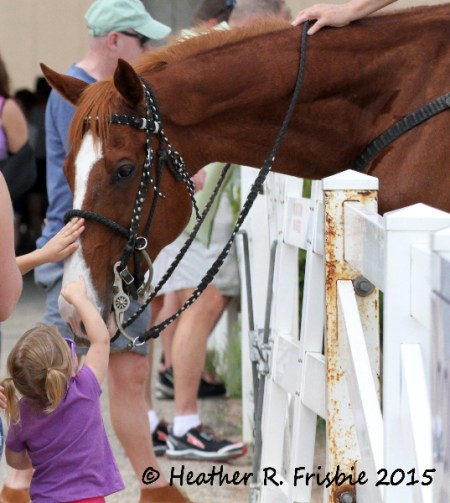 Making friends with a lead pony between races.