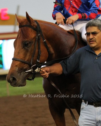 Clear eyed Nun the Less being led into the winners' circle after taking the Mystic Lake Derby