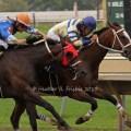 Festival Preview: Quarter Horse Stakes & Sprints