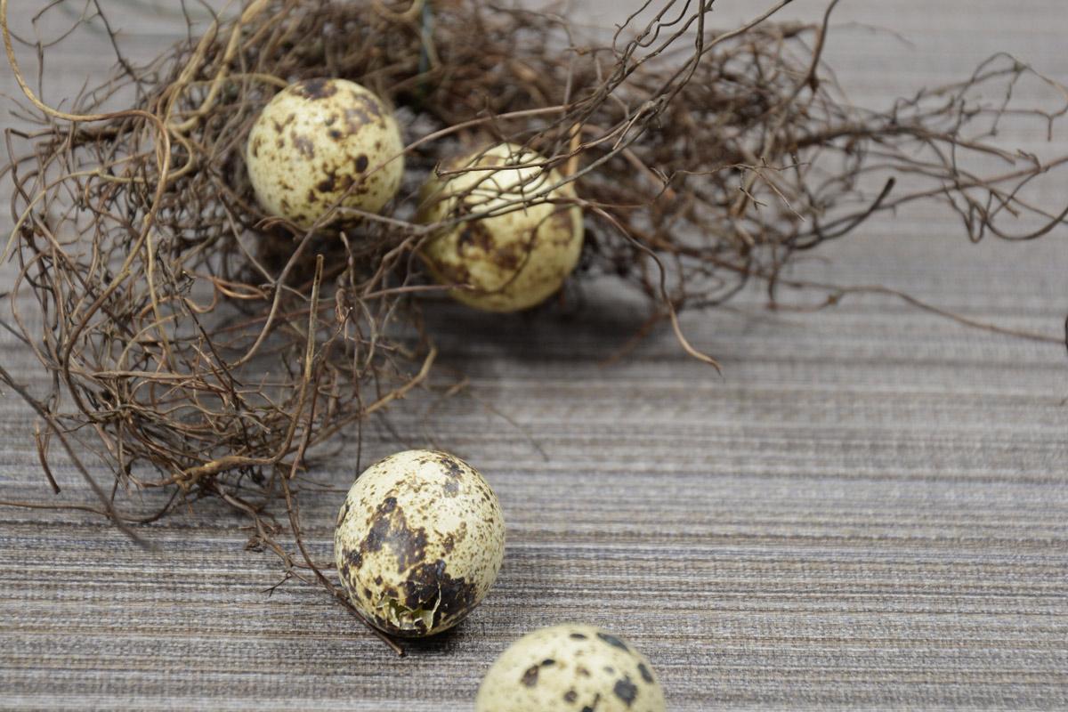 DEKORATION  die Natur frbt die schnsten Eier  mxliving