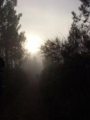 Jakobsweg: Palas de Rei