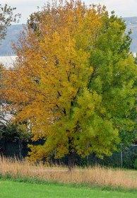 arbre-de-toutes-les-couleurs